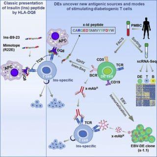 DEs-uncover-new-antigen-sources