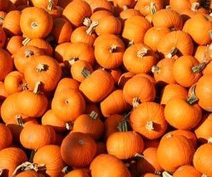 pumpkins-375x250